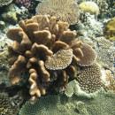 沖縄の珊瑚 Dr.Y