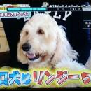 TV出演 西村和巳さん