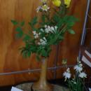 待合室の花 キクとボタンヅル 長谷部萩枝さん