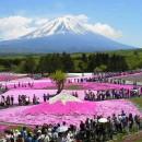 芝桜で富士山 富田みつのさん