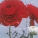 私の花たち02 伊東よしみさん
