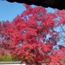 奈良の小さな秋  Dr.Y