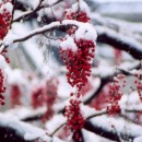 近所雪景色 小川一幸さん