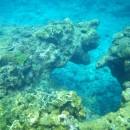 シーサーに見えるサンゴ礁   Dr.Y