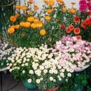 私の花たち003 伊東よ志みさん