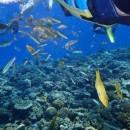 沖縄・水納島・息子の餌に群がる魚たち Dr.Y
