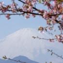 3月河津桜と富士  小川一幸さん