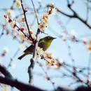 梅を楽しむように  小川一幸さん