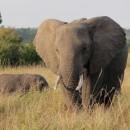 ケニアの象  山下寛さん