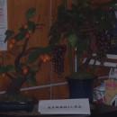 待合室の花 葡萄と柿 長谷部萩枝さん