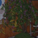 待合室の花 紫式部 長谷部萩枝さん