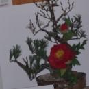 待合室の花 梅と椿 長谷部萩枝さん