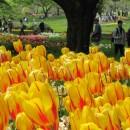 昭和記念公園4月29日001 石塚政幸さん