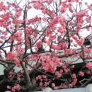 春近し  田邉武さん