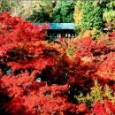 京都東福寺の紅葉 清水英樹さん