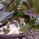 家の庭で生まれたカメレオン アフリカ在住田中裕子さん